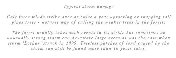 The forest usually takes such events in its stride but sometimes an unusually strong storm can devastate large areas as was the case when storm 'Lothar' struck in 1999. Treeless patches of land caused by the storm can still be found more than 10 years later.